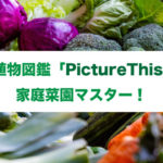 AI植物図鑑「PictureThis」で家庭菜園マスター!